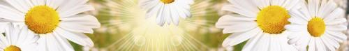 цветы  486