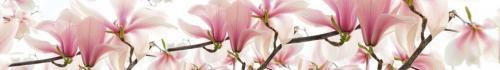 цветы  663 1