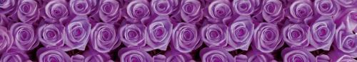 цветы  68  фиолет