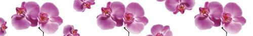 цветы  73
