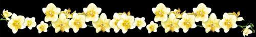 цветы  827