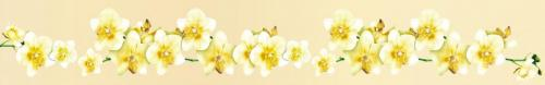 цветы  827 1