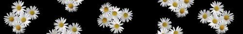 цветы  880