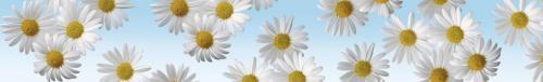 цветы  888 2