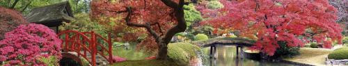 Сады  НБ 106
