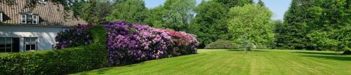 Сады  7832