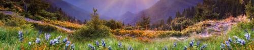 Природа  8713