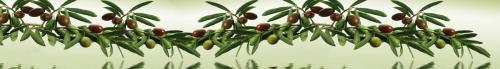 оливки  НБ 52