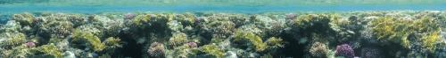 Подводный мир  1500