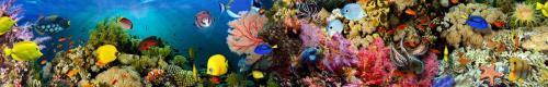 Подводный мир  8358