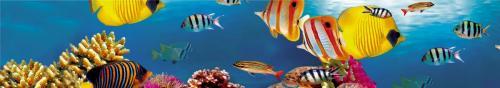 подводный мир  1513