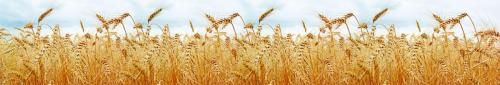 пшеница  372