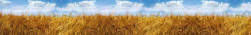 пшеница  374 1