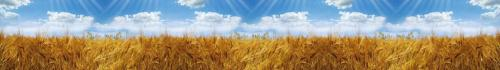 пшеница  374 2